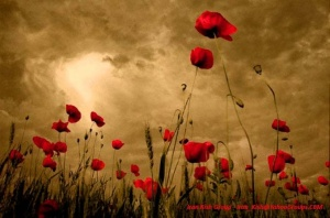 red-poppy-flowers-2